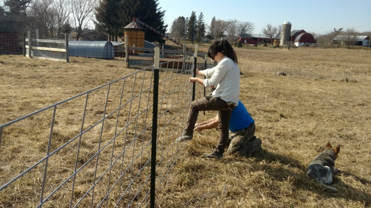 Lindsay and my dad working on fencing on a rare 70F sunny March day!